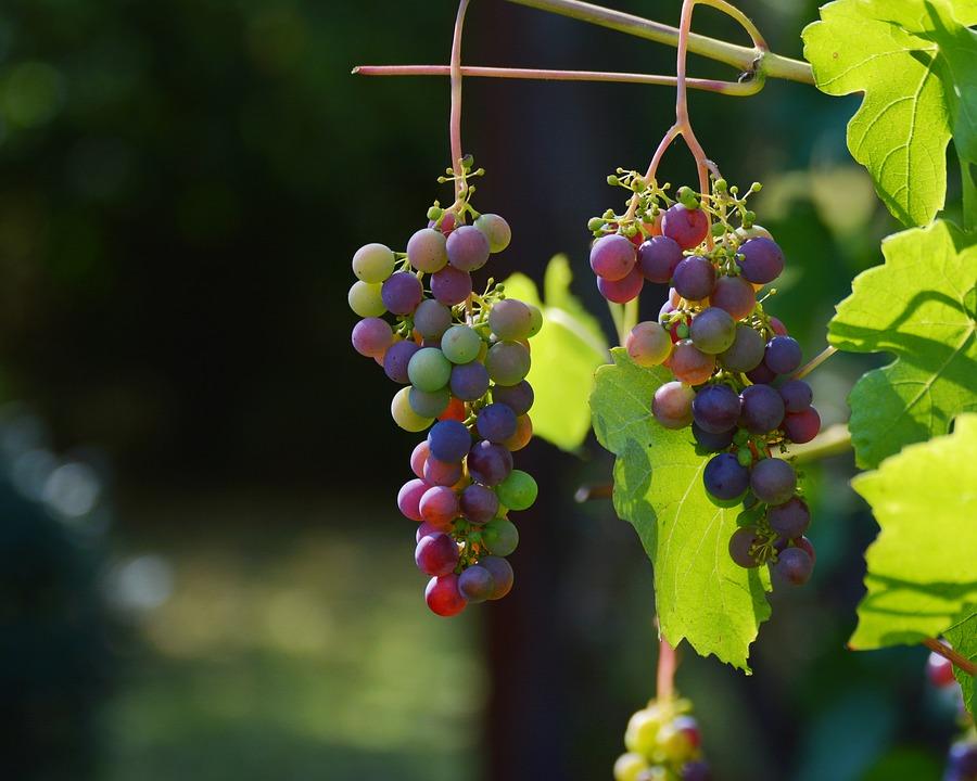 bourgogne vignoble 2