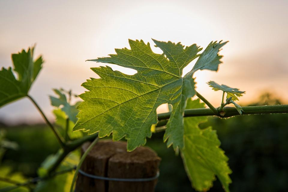 routes des vins image 2