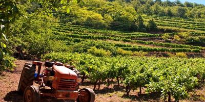Découvrez les vins du Sud Ouest