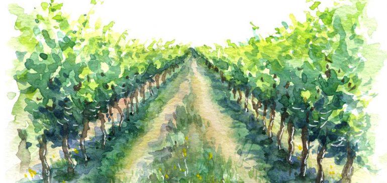 Les vins et l'appellation Margaux GC LURTON ESTATES